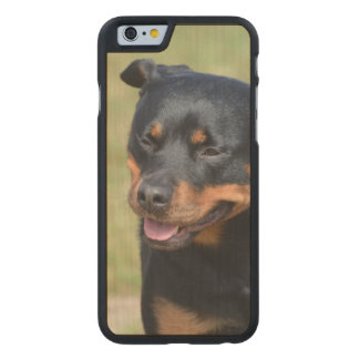Guileless Rottweiler Carved Maple iPhone 6 Slim Case