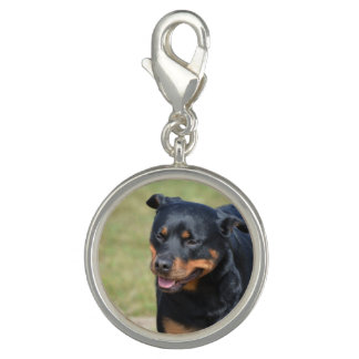 Guileless Rottweiler Charms