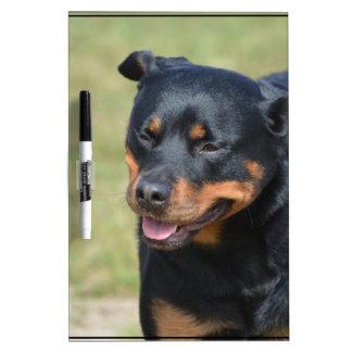 Guileless Rottweiler Dry-Erase Board