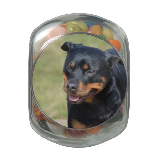 Guileless Rottweiler Jelly Belly Candy Jar
