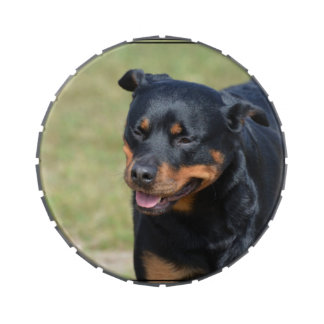 Guileless Rottweiler Jelly Belly Tin