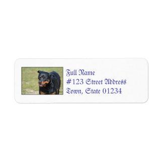 Guileless Rottweiler Label