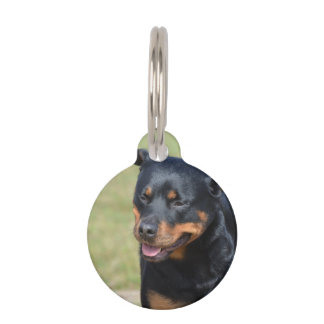 Guileless Rottweiler Pet Name Tag