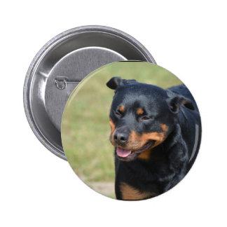 Guileless Rottweiler Pinback Button
