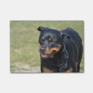 Guileless Rottweiler Post-it Notes