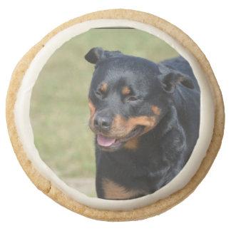Guileless Rottweiler Round Shortbread Cookie