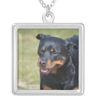 Guileless Rottweiler Silver Plated Necklace