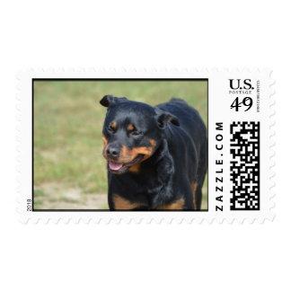 Guileless Rottweiler Stamp