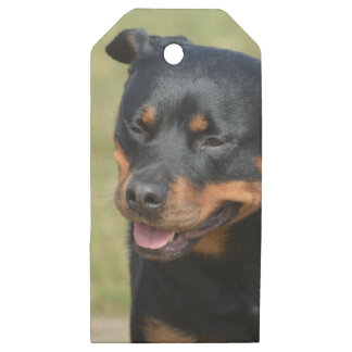 Guileless Rottweiler Wooden Gift Tags