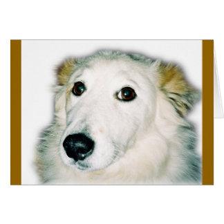 guilty dog card