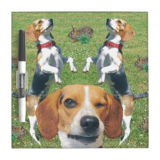 Guiñando beagles el beagle y los conejos secan al tablero blanco