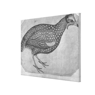 Guinea Fowl, from the The Vallardi Album Canvas Print