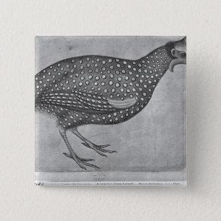 Guinea Fowl, from the The Vallardi Album Pinback Button