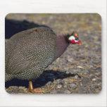 Guinea Fowl Mouse Pad