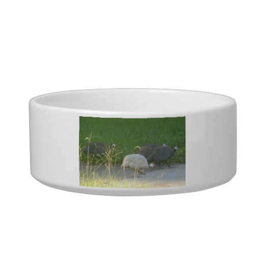 Guinea Fowl Pet Bowl