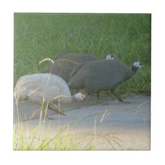 Guinea Fowl tile