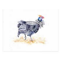 Guinea hen postcard