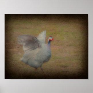 Guinea hen poster