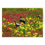 Guinea Hens in Wildflowers, Lytton Springs, TX Stationery Note Card