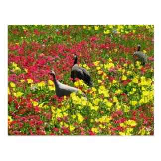 Guinea Hens in Wildflowers, Lytton Springs, TX Postcard