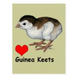 Guinea Keets del amor Postal