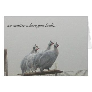 Guinea Lookouts Card