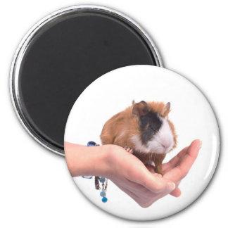 guinea pig 2 inch round magnet