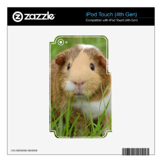 Guinea Pig and Grass iPod Touch 4G Decal
