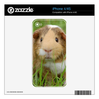 Guinea Pig and Grass Skins For The iPhone 4
