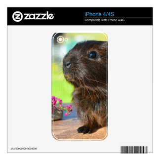Guinea Pig and Pink Flowers iPhone 4S Decals