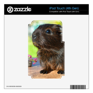 Guinea Pig and Pink Flowers iPod Touch 4G Decals
