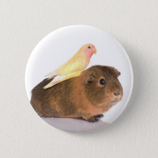 guinea pig and yellow bird button