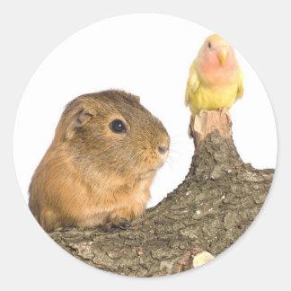 guinea pig and yellow bird classic round sticker