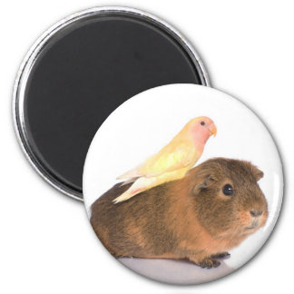 guinea pig and yellow bird magnet