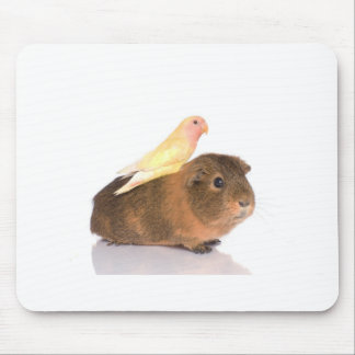 guinea pig and yellow bird mouse pads