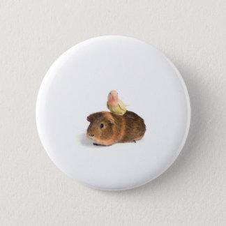 guinea pig and yellow bird pinback button