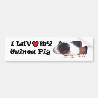 Guinea Pig Bumper Sticker Car Bumper Sticker