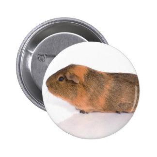 guinea pig buttons