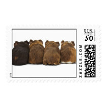 Guinea Pig Butts Stamps