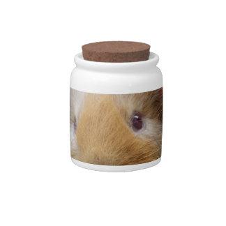 Guinea pig candy jar