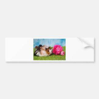 guinea pig car bumper sticker
