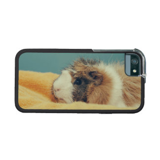 Guinea pig iPhone 5 cover