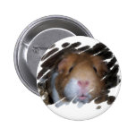 GUINEA PIG CAVY FACE PIN