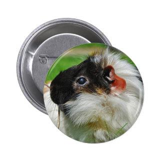 Guinea pig Chewie Pinback Button