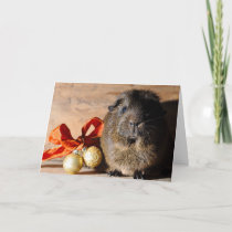 Guinea Pig Christmas Card