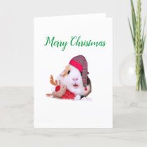 Guinea Pig Christmas Holiday Card
