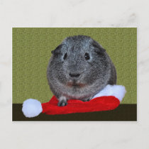 Guinea Pig Christmas Holiday Postcard