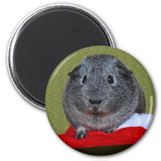 Guinea Pig Christmas Magnet