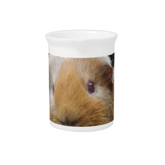 Guinea pig drink pitcher