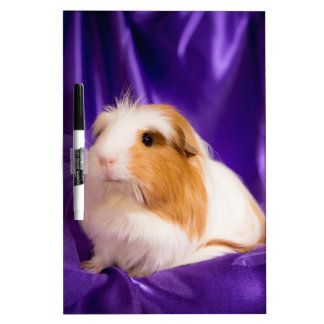 guinea pig dry erase whiteboards